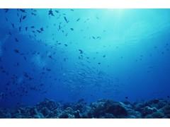 海洋环境自动检测系统